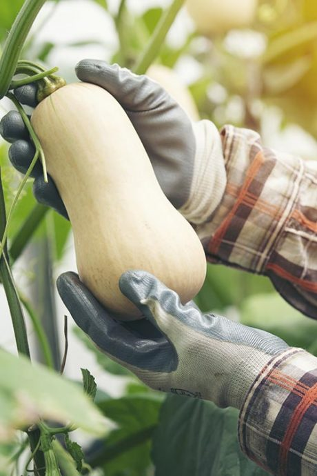 Safe Handling of Vegetables